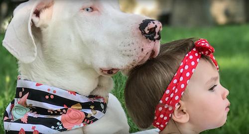 глухая собака дружит с девочкой