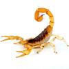 скорпион на борту самолёта