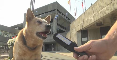 пёс хочет стать мэром