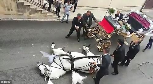 лошадь упала от теплового удара