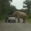 слон оторвал крышу у пикапа