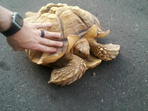 черепаха вернулась домой
