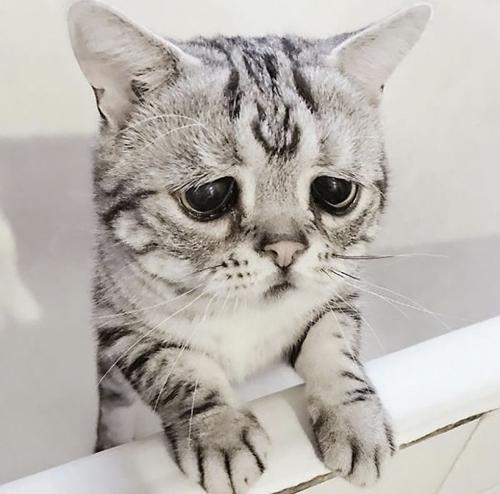 кошка с самым грустным лицом