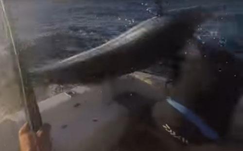 пойманная рыба ударила мужчину