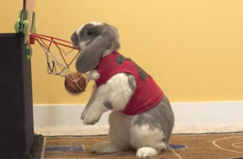 кролик любит баскетбол