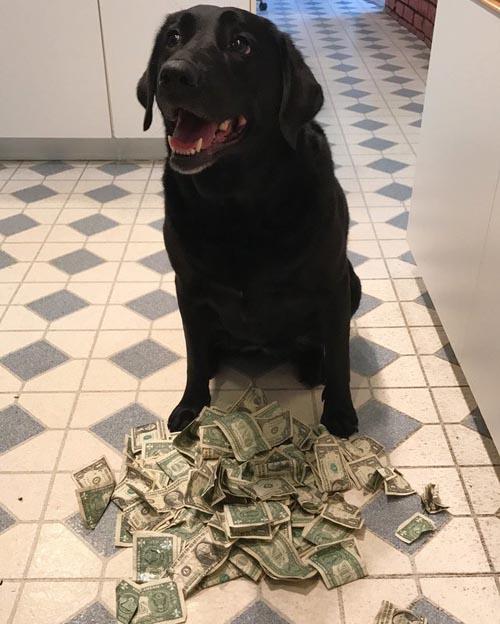 собака платит за лакомства