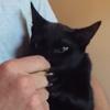 кот очень любит колбасу