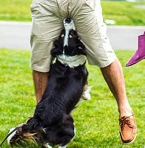 семейная фотосессия с псом
