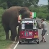 слон оказался неблагодарным