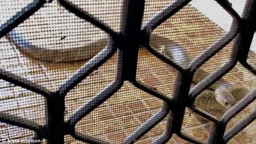 змея заблокировала семью в доме