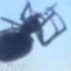 монструозный паук-мутант