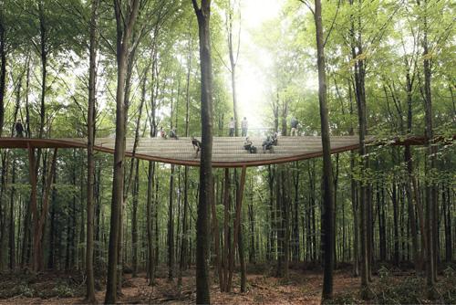 пешеходная дорожка в лесу