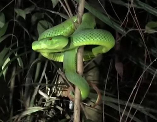 змея показала фотографу пасть
