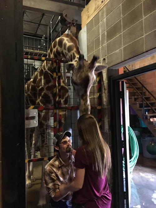 предложение с помощью жирафа