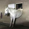лошадь застряла в окне конюшни