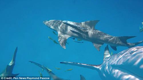 акула выплюнула видеокамеру