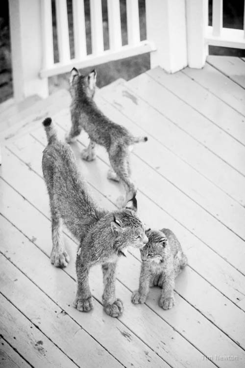 необычные гости на крыльце