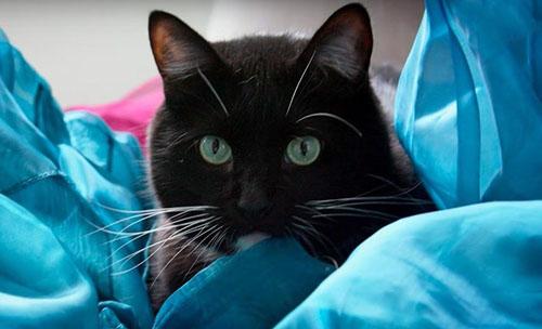 кот спас от самоубийства