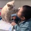 кот мешает делать домашние задания