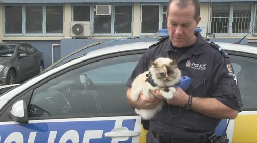 кошка на один день в полиции