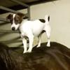 собака помогает лошади чесаться