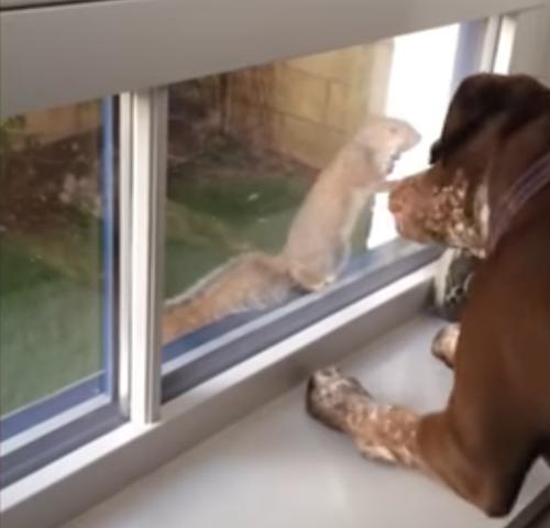 собака играет с белкой