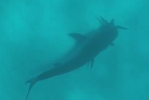 акула сорвала злость на дайвере