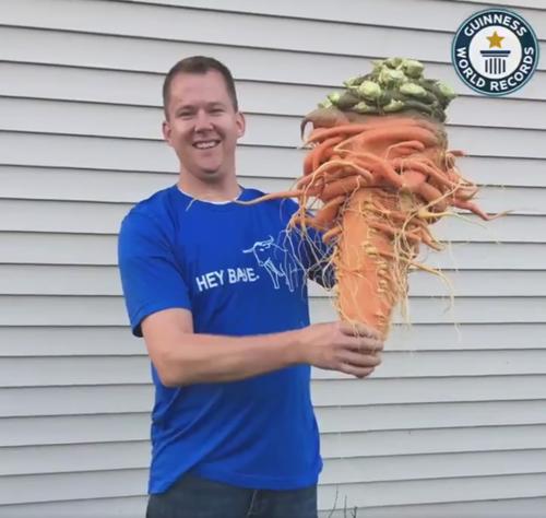 самая большая в мире морковь