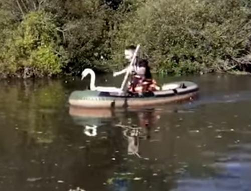 лебедь запутался в леске