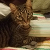 кошка крадёт кухонную утварь