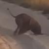 слонёнок уткнулся хоботом в песок