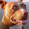 помощь брошенным собакам