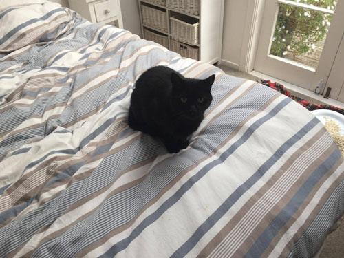 ошибочно похищенная кошка