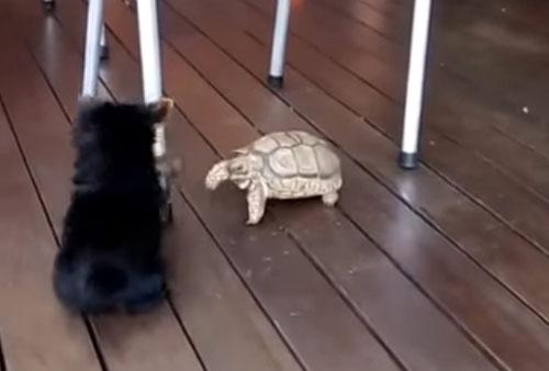 черепаха отказалась играть