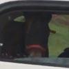 пони на заднем сиденье машины