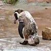 пингвин влюбился в героиню аниме