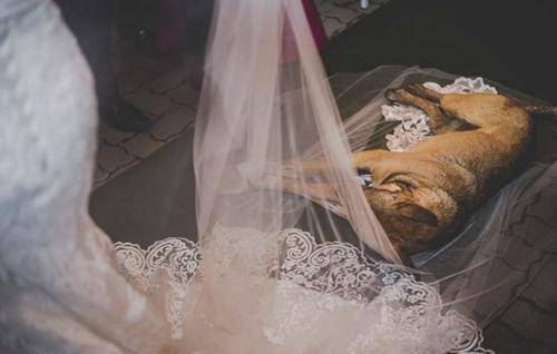бродячая собака на свадьбе