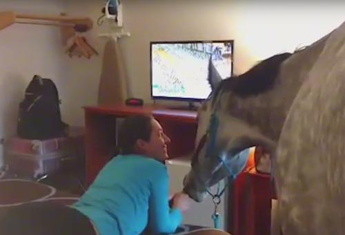 лошадь заселили в отель