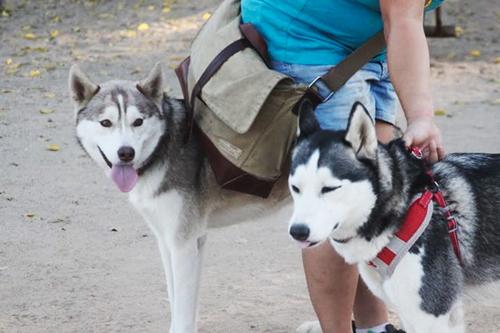 собак оставили в парке с запиской