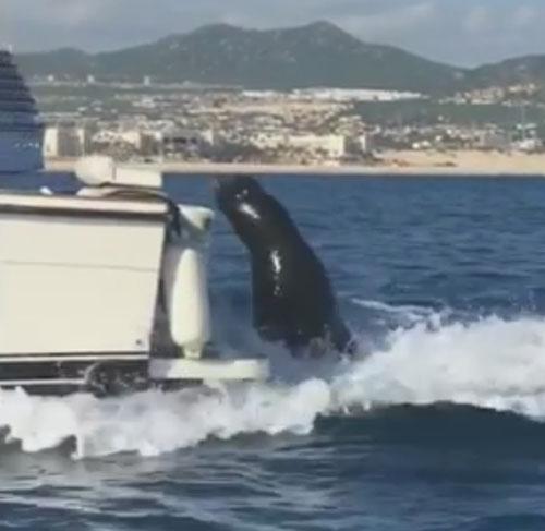 тюлень забрался на лодку