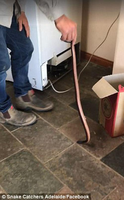 змея спряталась под холодильником