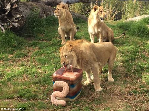 торт на день рождения для львов