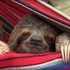 приют для детёнышей ленивцев