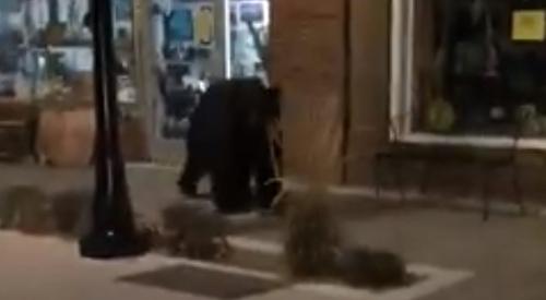 полицейский спугнул медведя