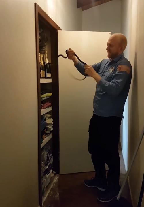 змея спряталась в стенном шкафу
