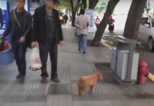 щенок собирает мусор