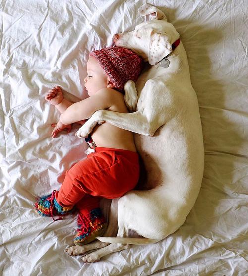 собака привязалась к ребёнку