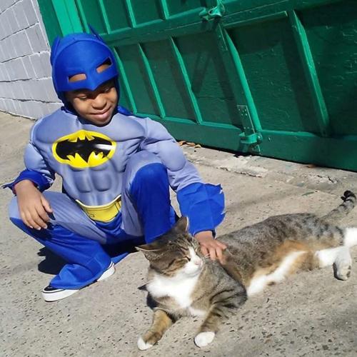 супергерой для приютских кошек