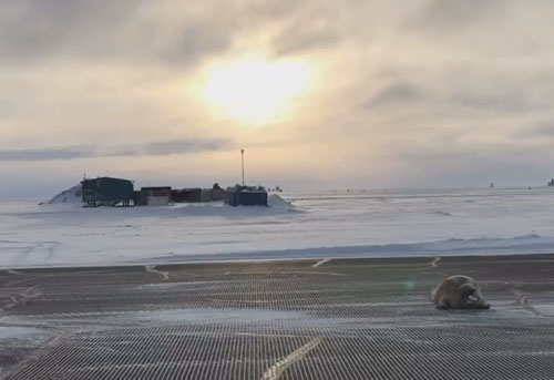 тюлень явился в аэропорт