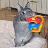 кролик любит порядок